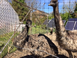 city emus