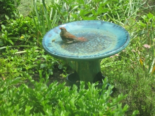 cardinal bath 2