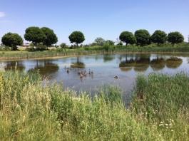 target pond