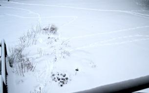 amusing deer trails
