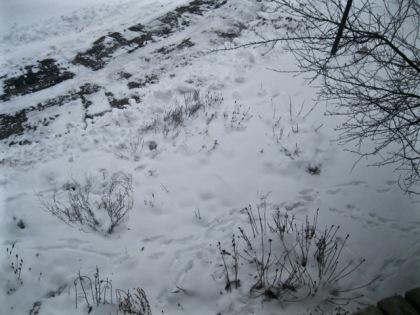 deer tracks two