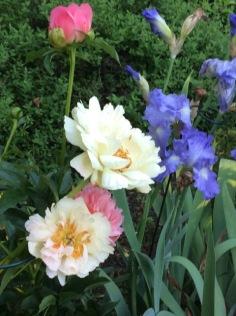 iris and peony