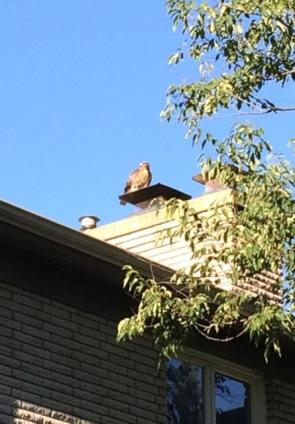 chimney eagle