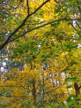 autumn depth 2