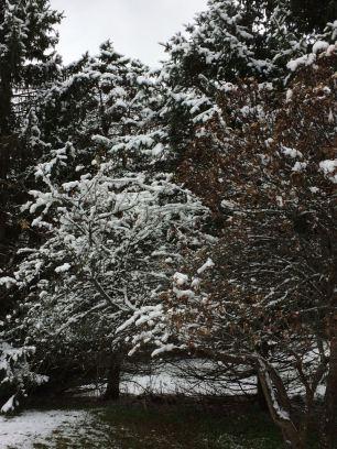 nov snow 1
