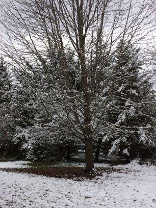 nov snow 2