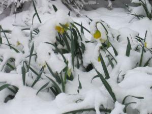 snowdaffs 2