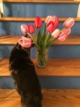 tulips z