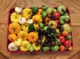 last fruits