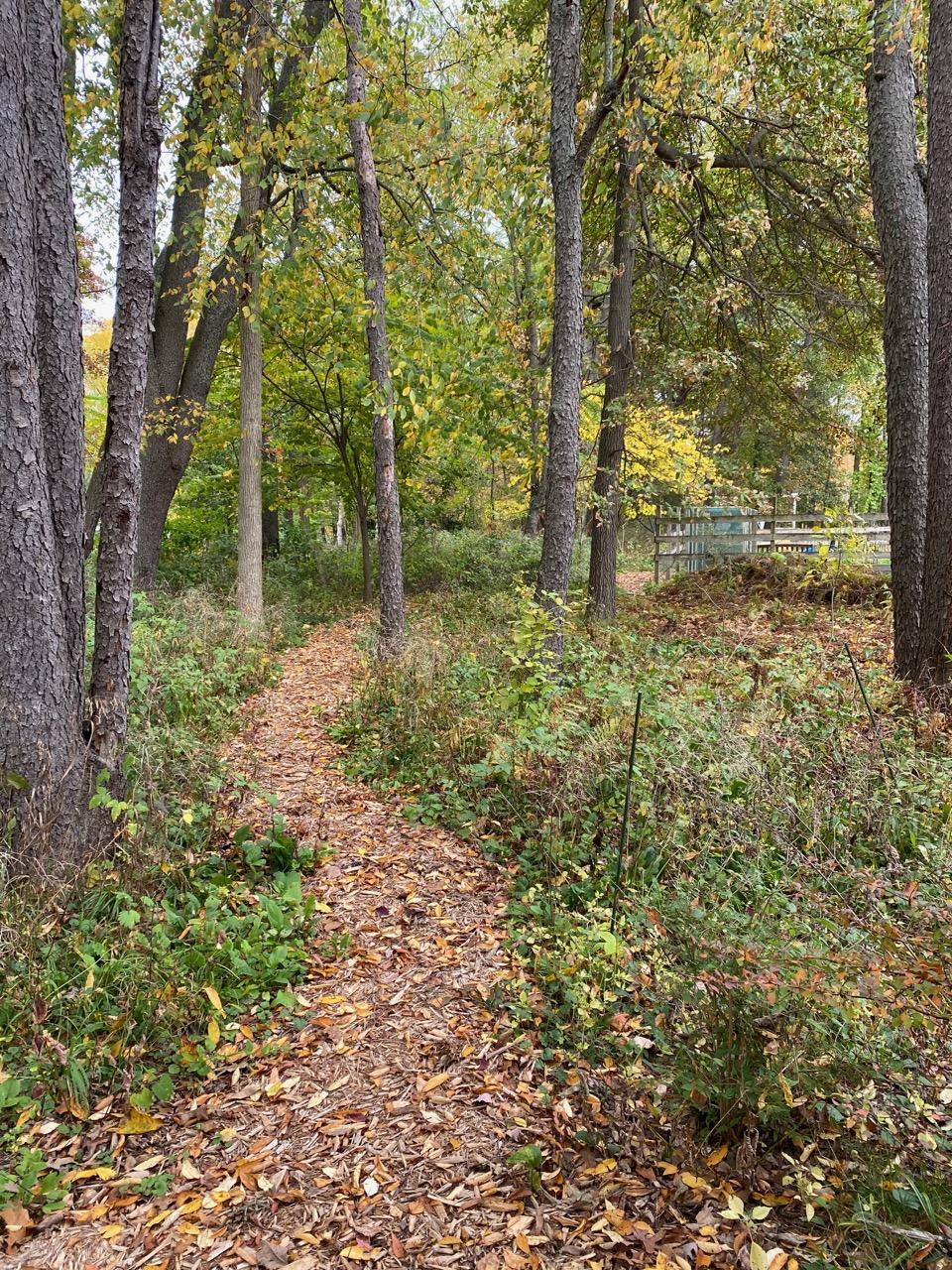 oct blog path