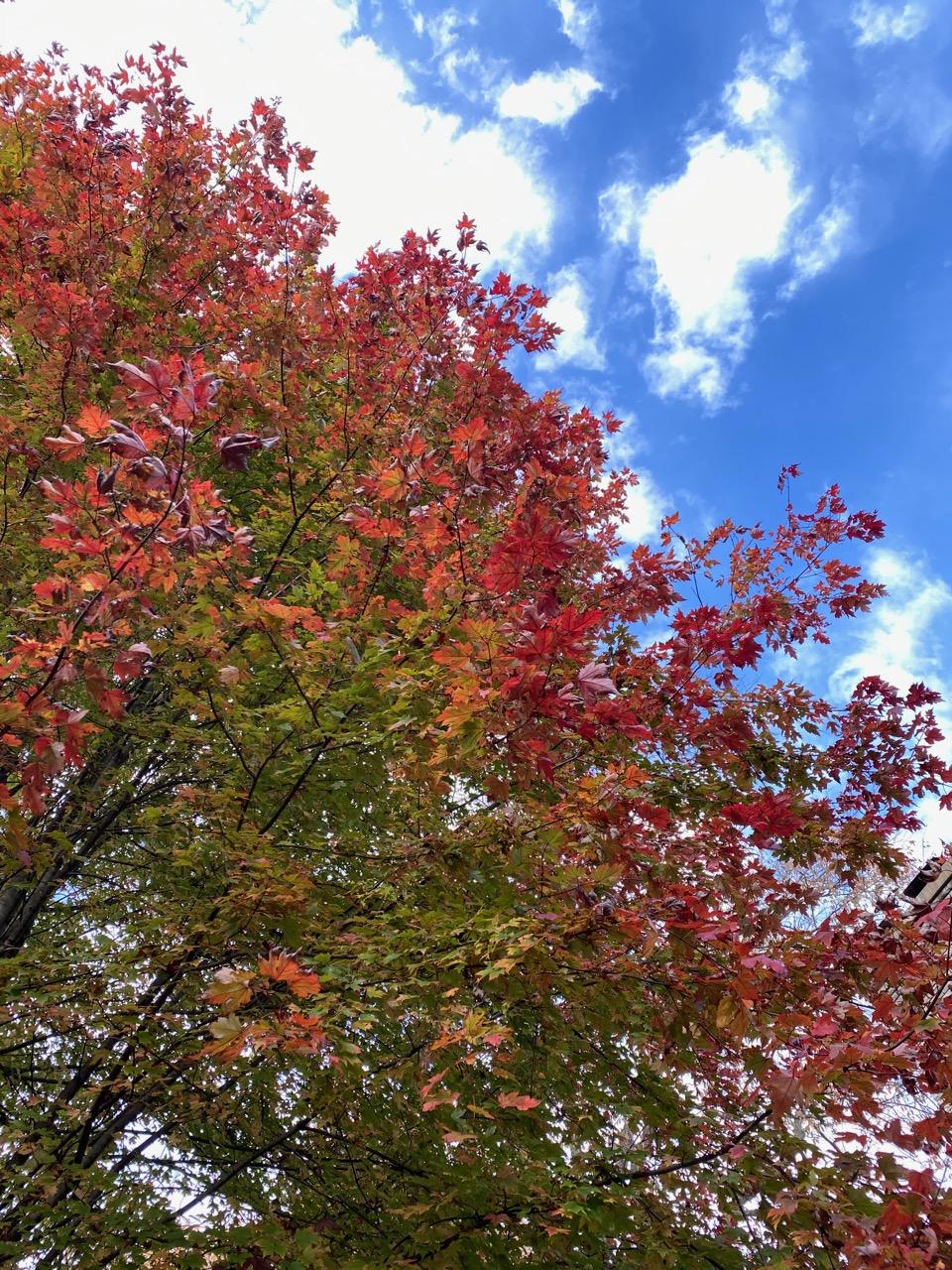 oct blog red tree