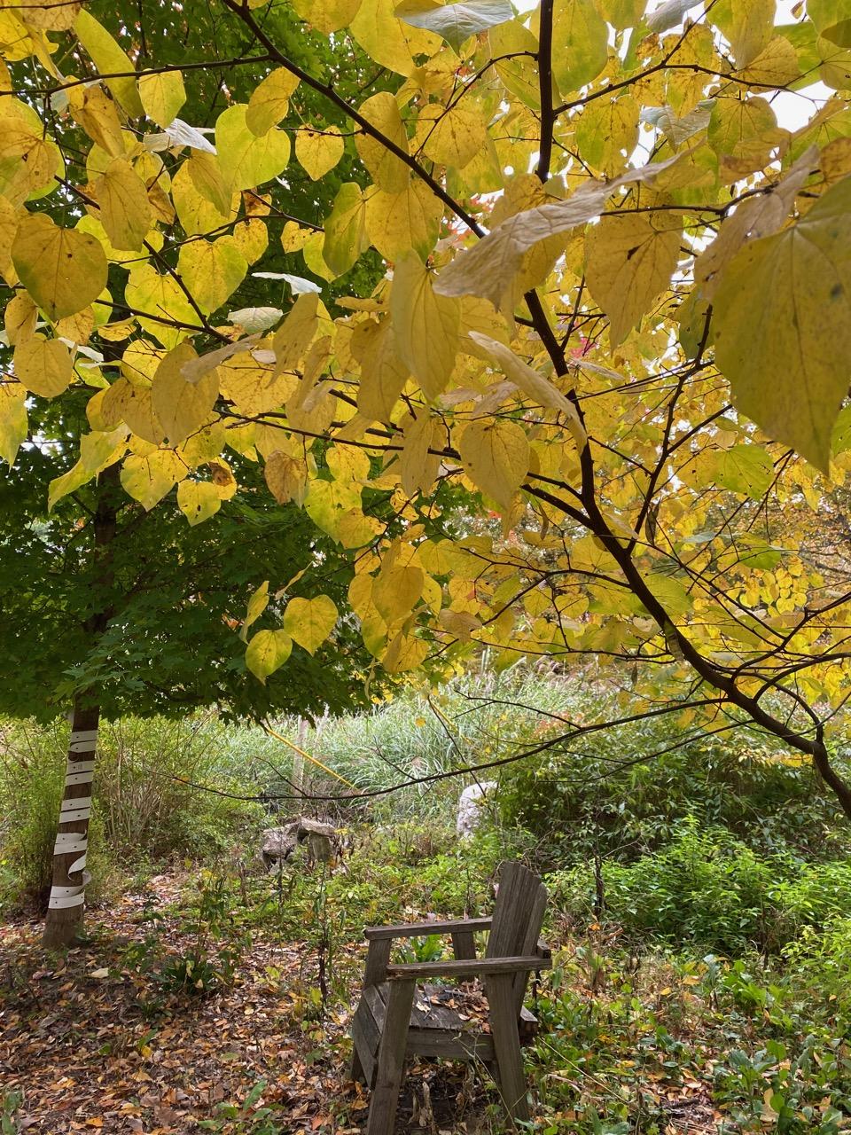 oct blog yellow tree chair