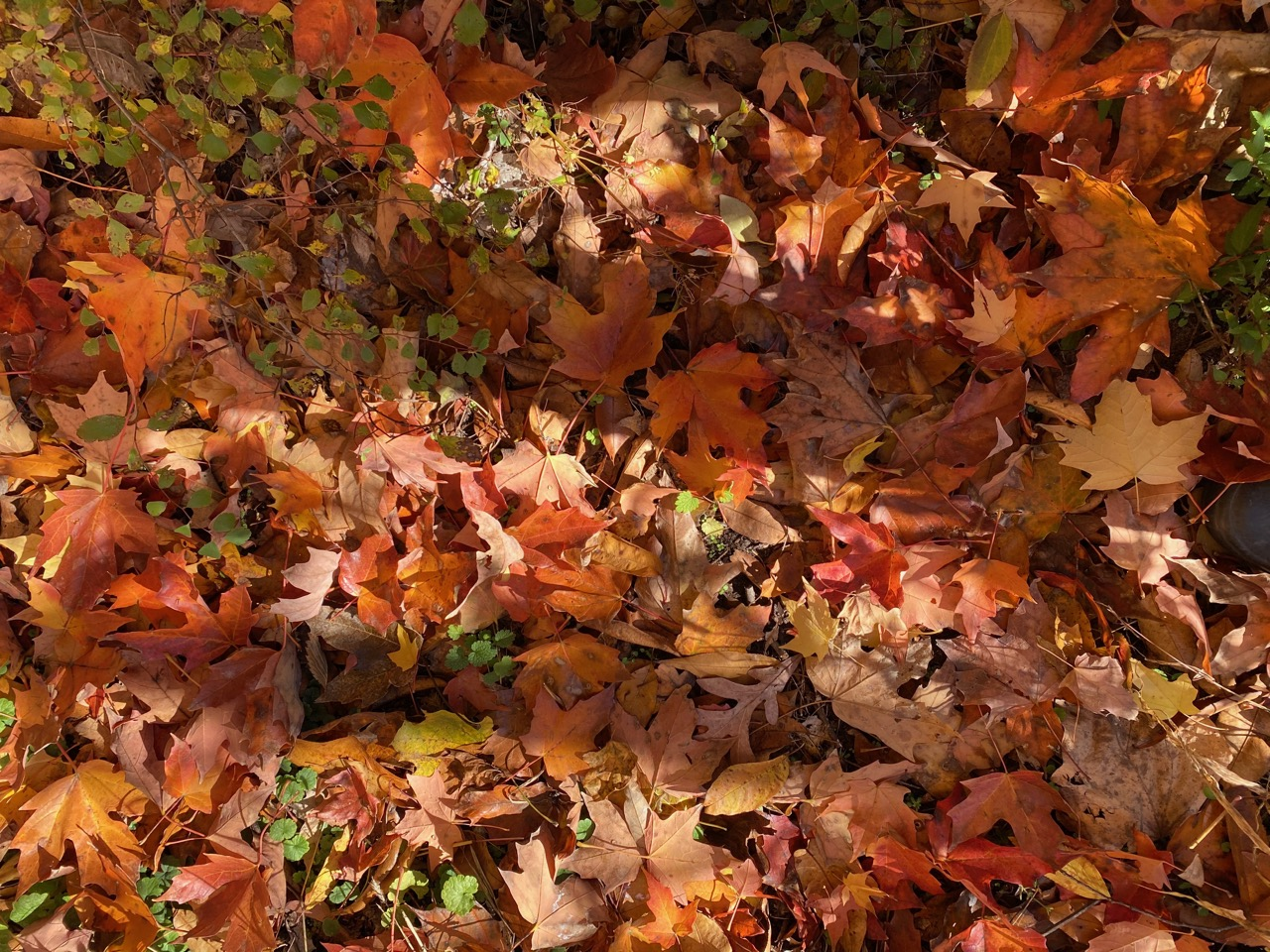 leafy ground