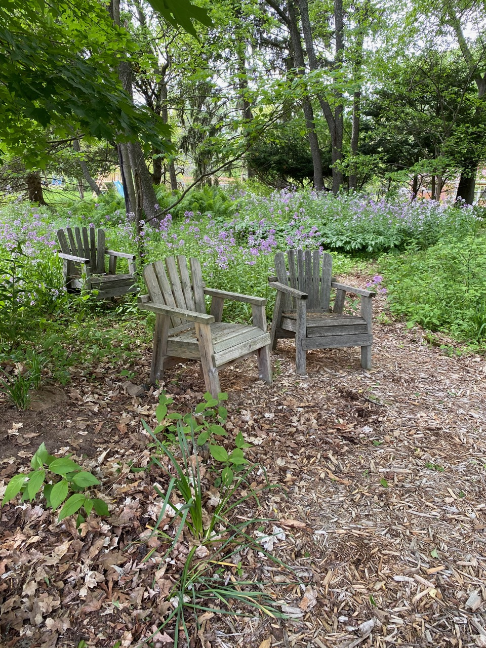 chairs in the woods