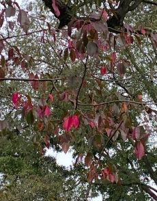 b red leaves