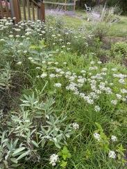 blog herb garden