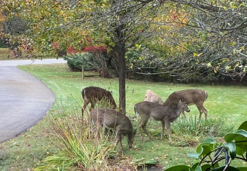 deer grouping up